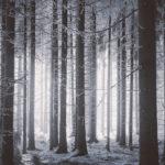 зима природа