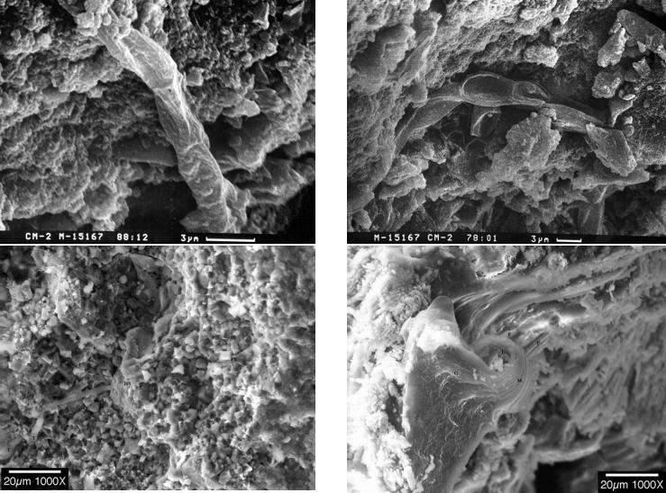 Окаменелости в Мёрчисонском метеорите. Фото предоставлено Палеонтологическим институтом имени А. А. Борисяка РАН