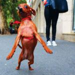 Смешные фотографии собак