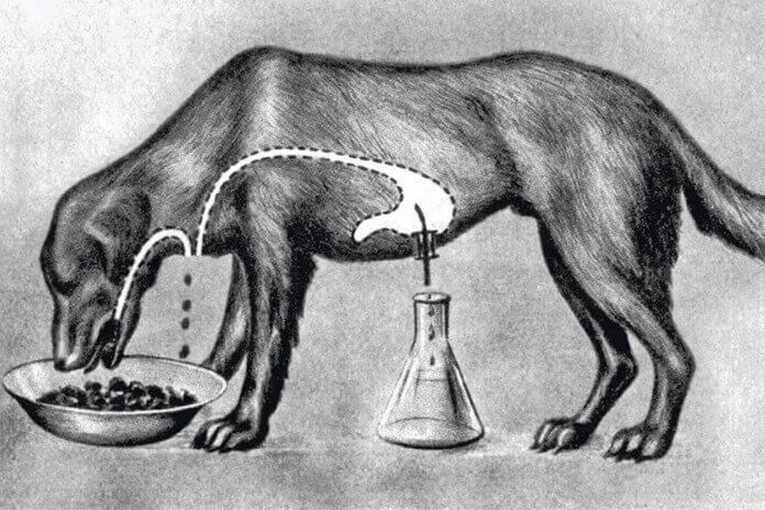 Эксперименты с «собакой Павлова»