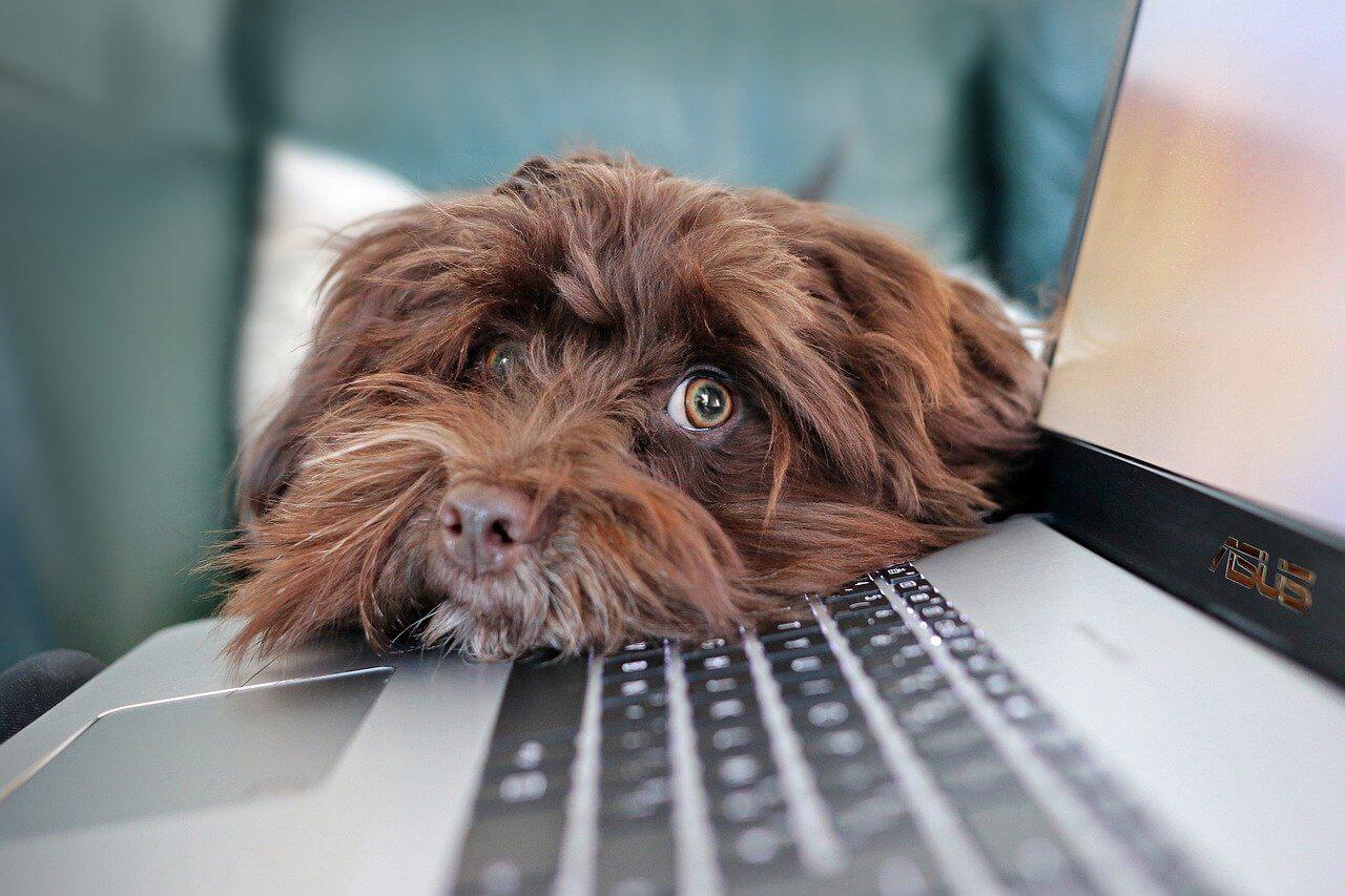 собака ноутбук