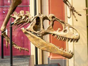 скелет динозавр