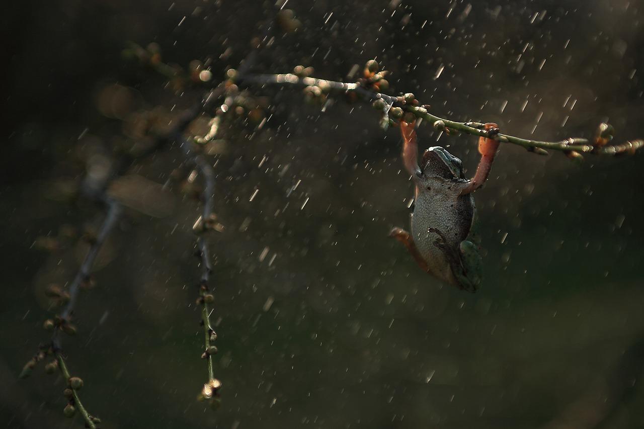 дождь лягушка
