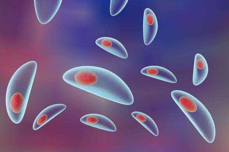 Toxoplasma.