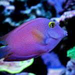 рифовая рыба