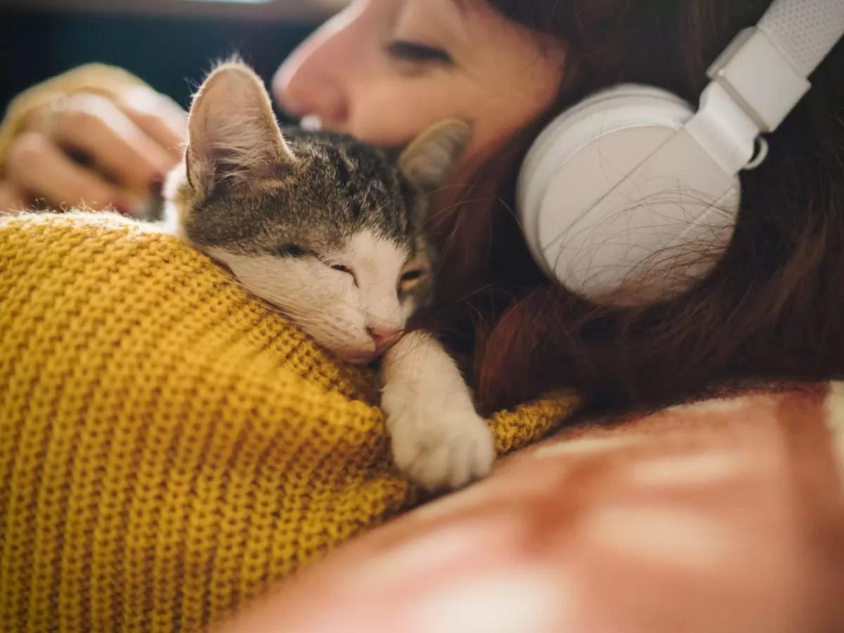 музыка кошка