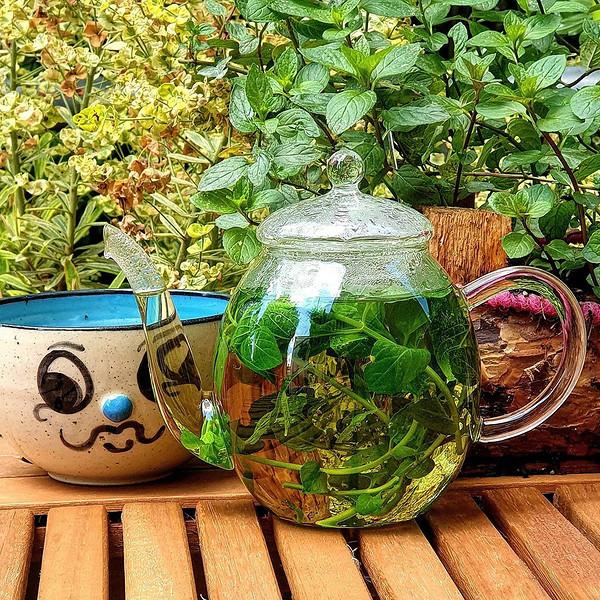 Травяной чай из мяты перечной
