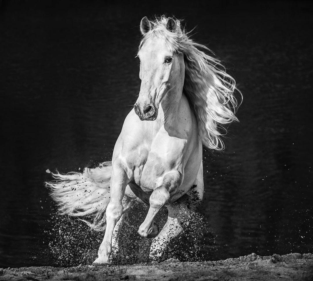 фотограф Дэвид Ярроу