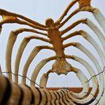 анатомия скелет