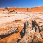 засуха пустыня жара
