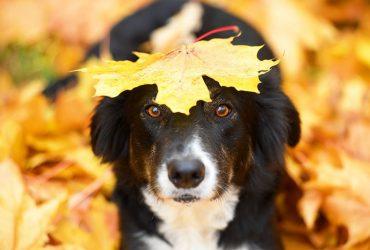собака осень