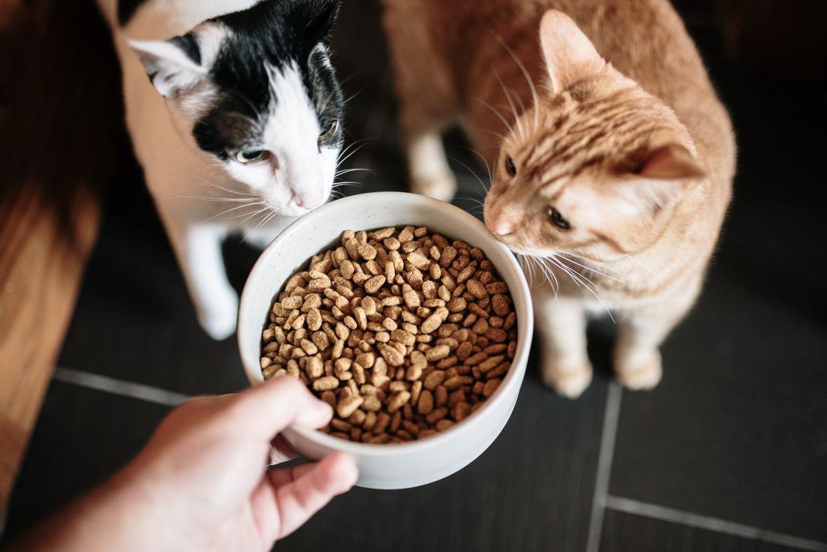 кошка корм