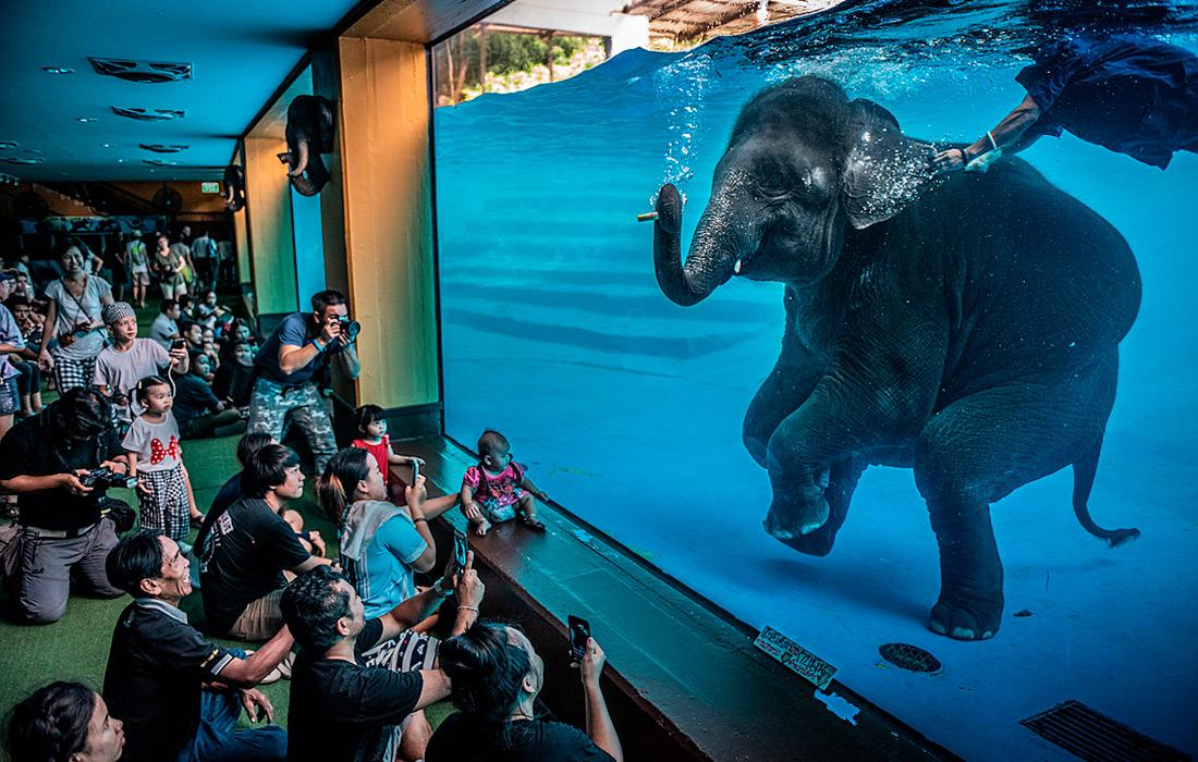 Лучшие фотографии дикой природы 2021 года